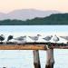 46 Terns