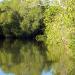 48 Mangrove Swamps